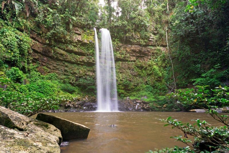 Cascade de ginseng en bassin de Maliau photographie stock