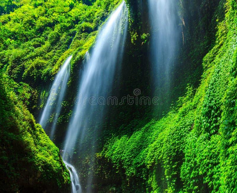 Cascade de Madakaripura, Java-Orientale, Indonésie image stock
