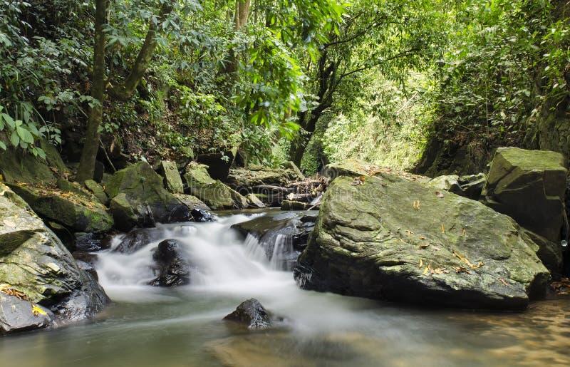 cascade de nature photo stock