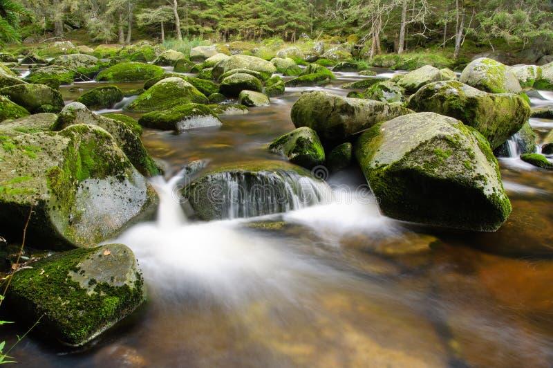 Cascade de rivière de montagne photographie stock libre de droits
