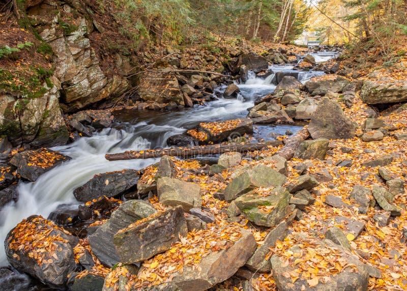 Cascade de rivière de parc d'algonquin photo stock