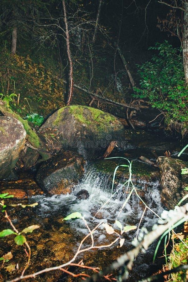 Cascade de ruisseau de forêt images stock