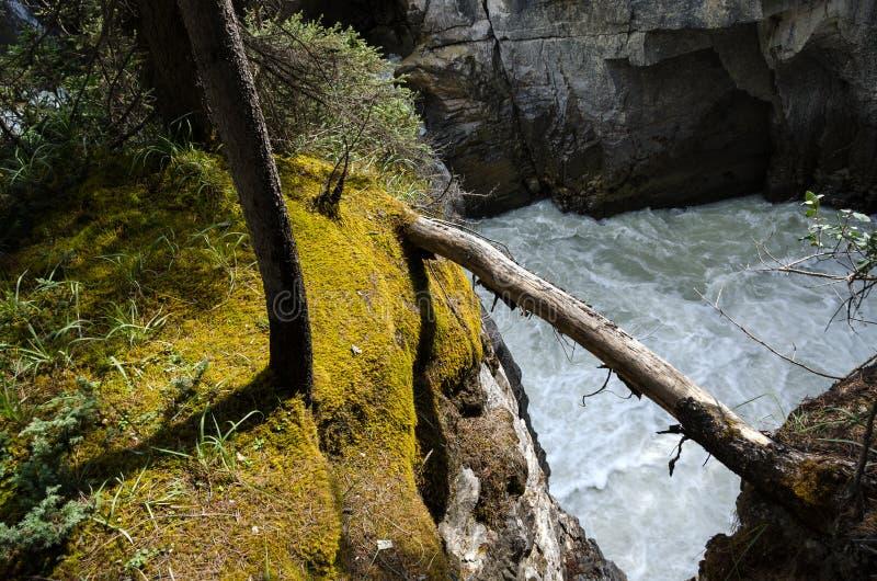 Cascade de Sunwapta photos libres de droits