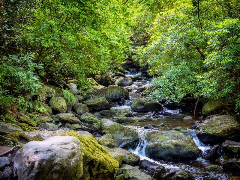 Cascade de Torc près de Killarney à l'anneau de Kerry photos libres de droits