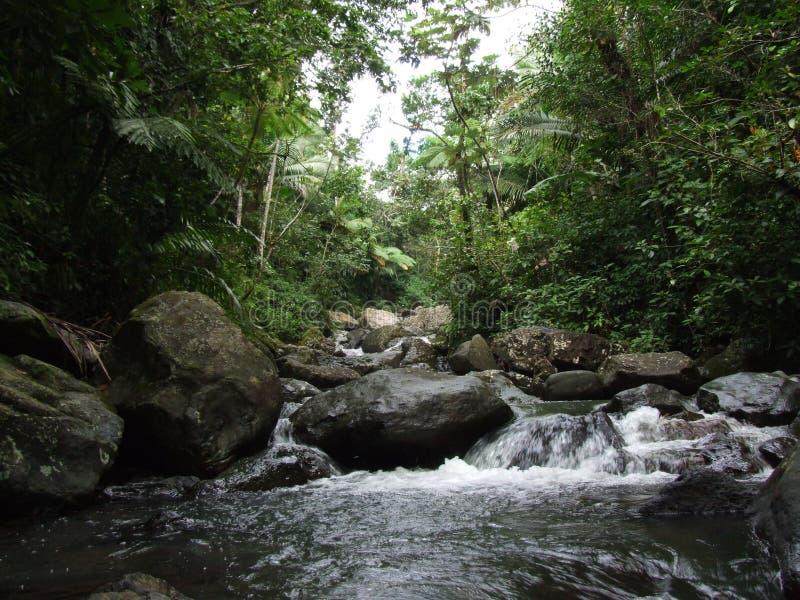 Cascade de Yunque photos libres de droits