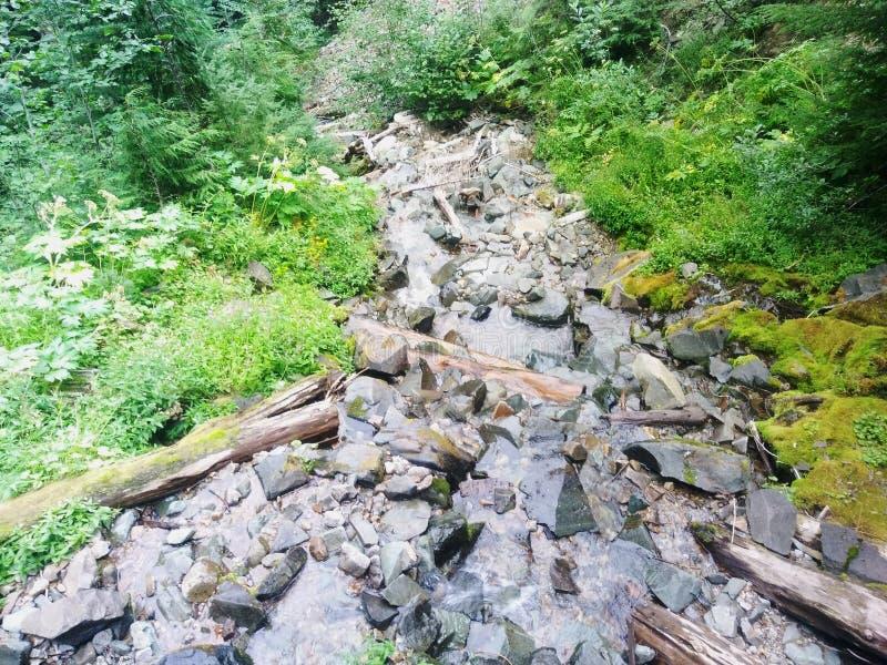 Cascade en cristal Washington de montagne images libres de droits