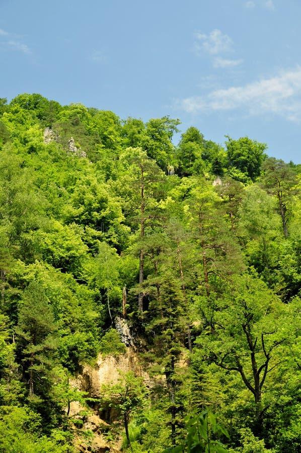 Cascade en montagne de gorge de la Guam, région de Krasnodar photo stock