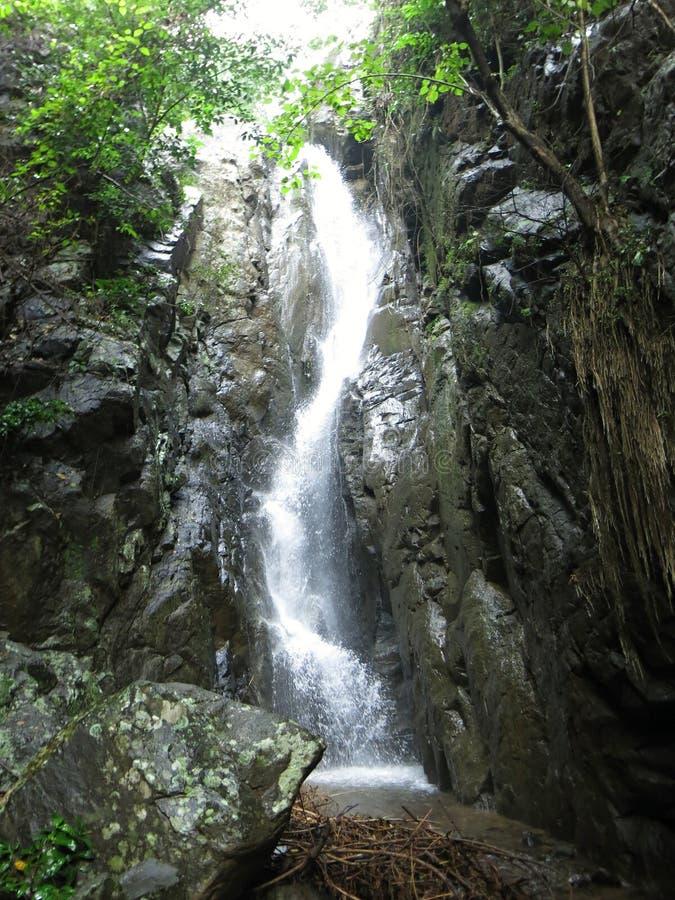 Cascade en nature sauvage de forêt tropicale avec la végétation luxuriante photo stock