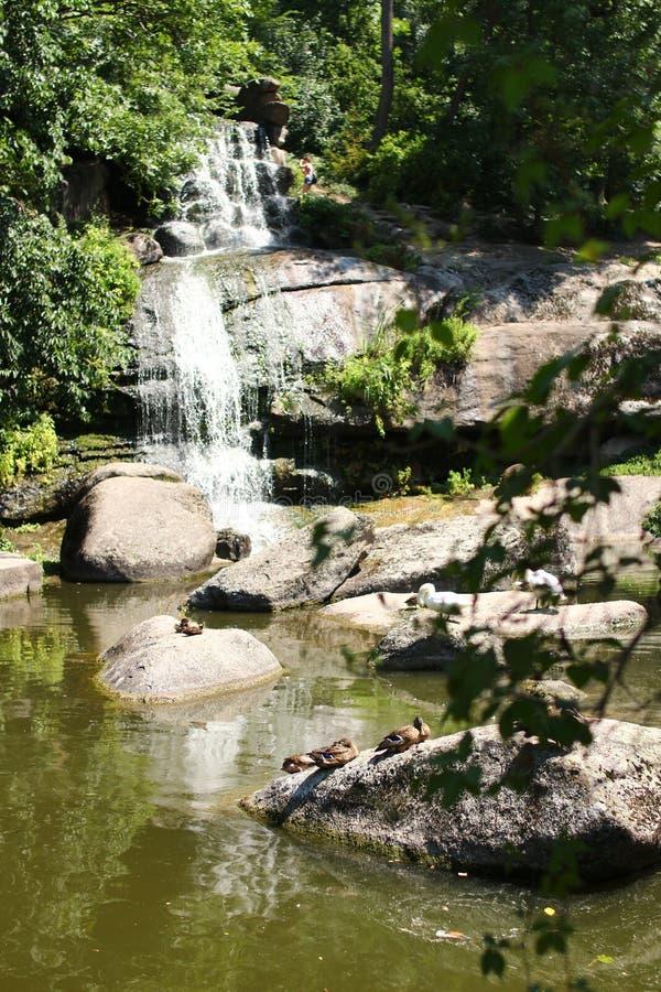 Cascade en parc de Sofiyivsky Arborétum de jardin botanique dans Uman, Cherkasy Oblast, Ukraine photo stock