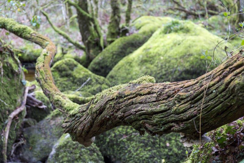 Cascade et roches moussues chez Becky Falls, Devon photographie stock