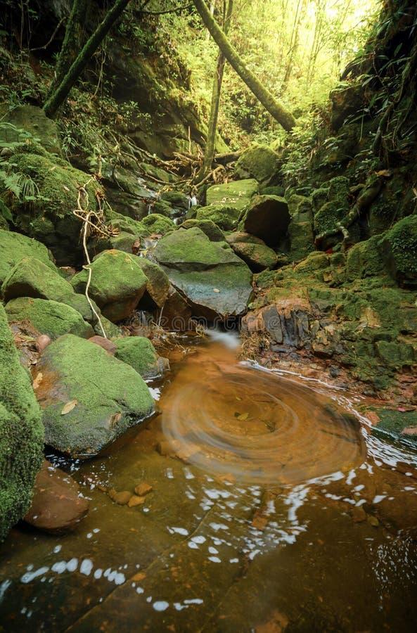 Cascade et vortex dans la forêt profonde photo stock