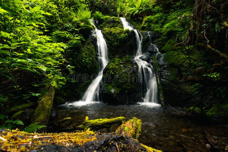 Cascade Falls, Quinault Loop Trail, Quinault Lake and rain forest, Olympic National Park, Washington, Travel USA, toerisme, natuu stock foto