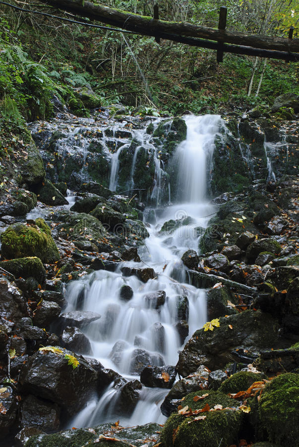 Cascade in Forest royalty free stock photos