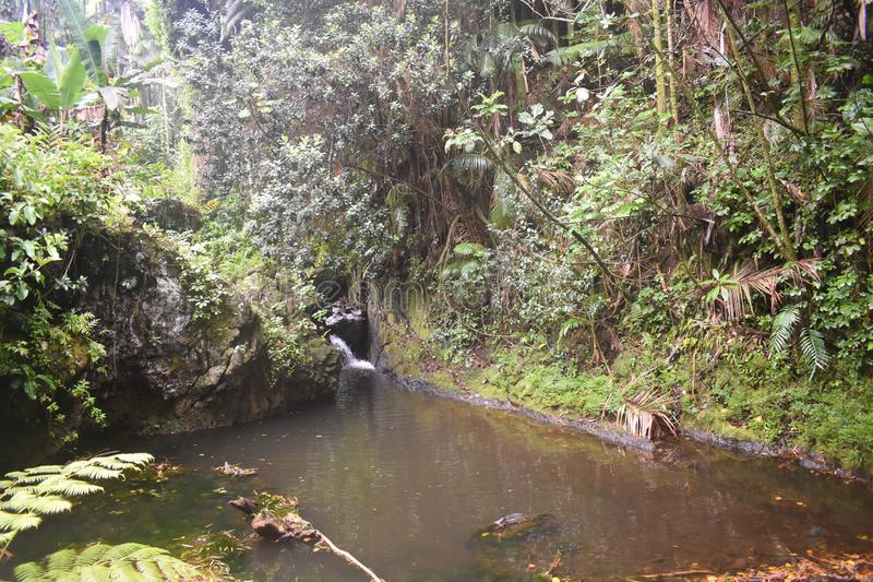 Cascade glissant dans une piscine paisible parmi une forêt tropicale tropicale image libre de droits