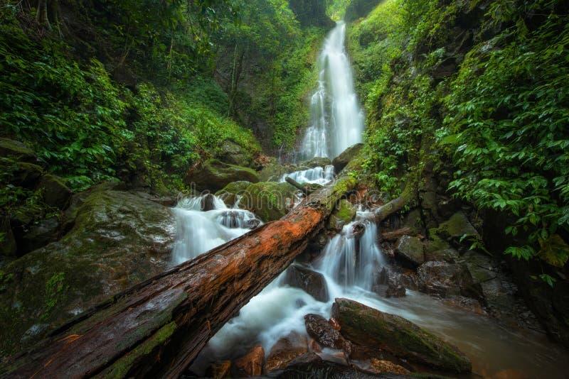 Cascade haute étroite de vue dans la forêt profonde au parc national, scène de rivière de cascade photos stock