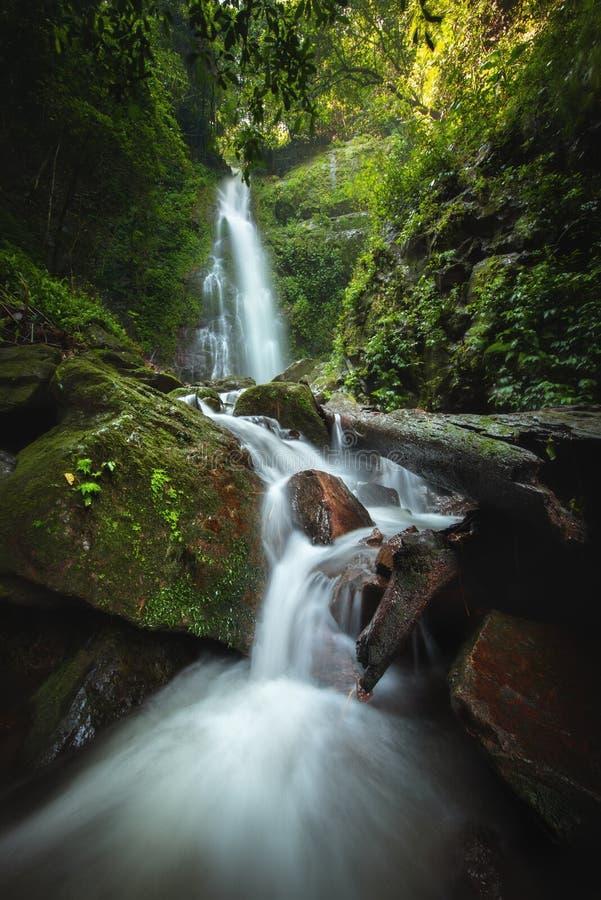 Cascade haute étroite de vue dans la forêt profonde au parc national, scène de rivière de cascade photo libre de droits