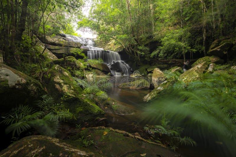 Cascade haute étroite de vue dans la forêt profonde au parc national, scène de rivière de cascade image stock