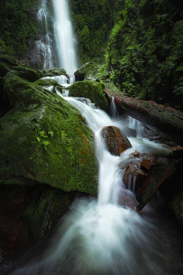 Cascade haute étroite de vue dans la forêt profonde au parc national, scène de rivière de cascade photo stock