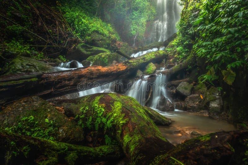 Cascade haute étroite de vue dans la forêt profonde au parc national, scène de rivière de cascade photos libres de droits