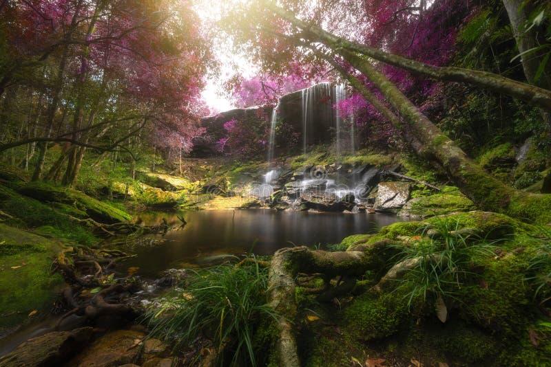Cascade haute étroite de vue dans la forêt profonde au parc national, scène de rivière de cascade photographie stock libre de droits