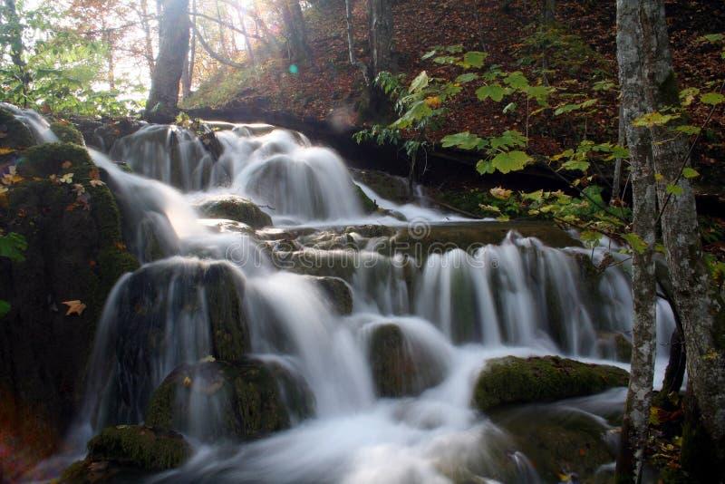 Cascade in het bos stock foto's