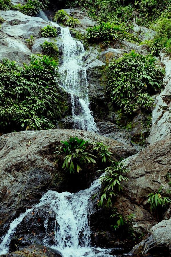 Cascade profondément dans la forêt tropicale amazonienne avec la végétation luxuriante image stock