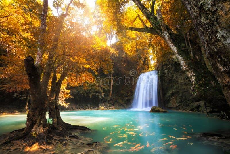 Cascade profonde de forêt photos libres de droits