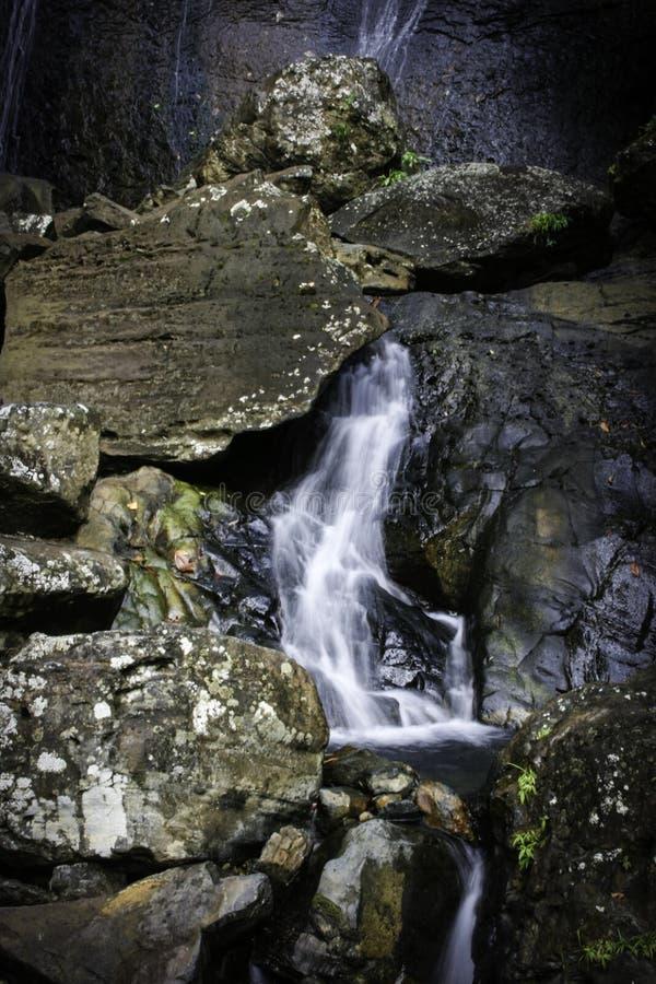 Cascade sous la pluie nationale Forest Puerto Rico d'EL Yunque photographie stock libre de droits