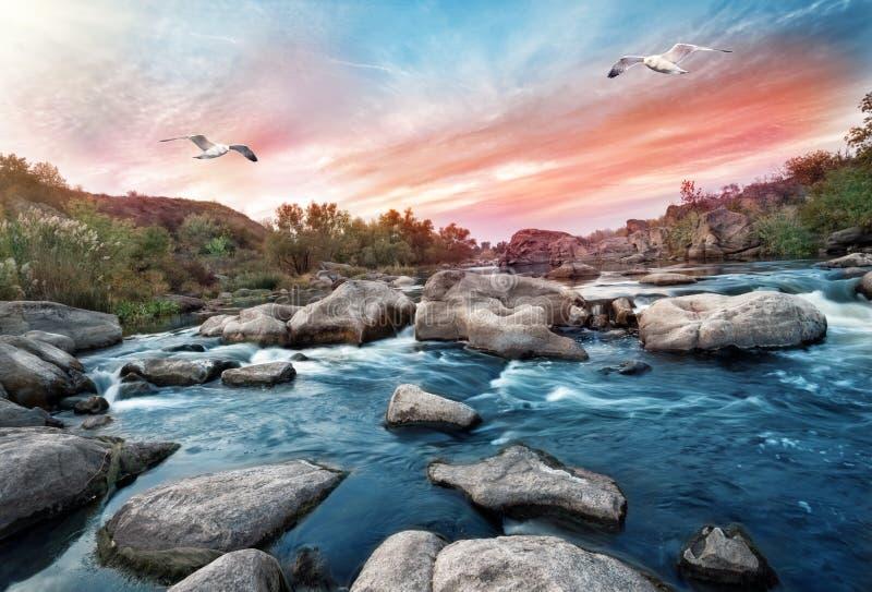 Cascade sur la rivière de montagne avec des mouettes photo stock