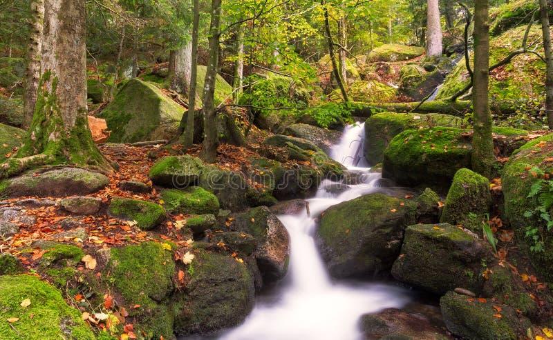 Cascades à écriture ligne par ligne de Gertelsbacher en automne, forêt noire images libres de droits