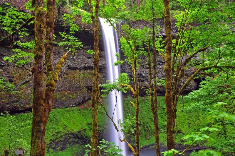 Cascades à écriture ligne par ligne par les arbres photo stock