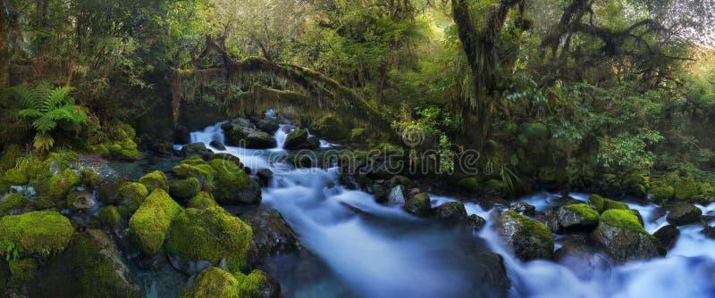 Cascades d'Autumn Forest Landscape With Beautiful Falling de crique et et feuilles colorées sur les pierres photographie stock