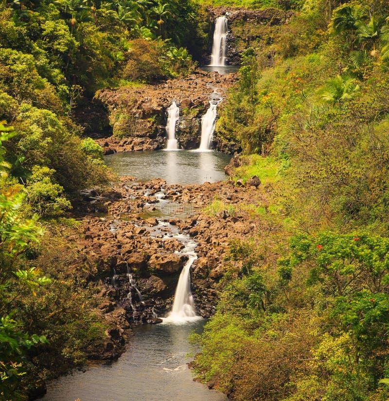 Cascades d'Umauma sur la grande île d'Hawaï photographie stock libre de droits