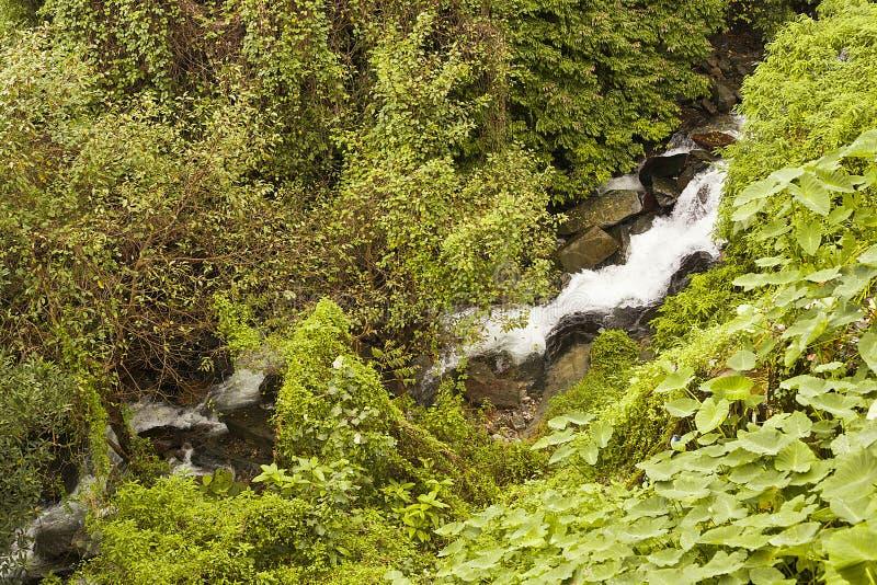 Cascades dans la forêt photos libres de droits