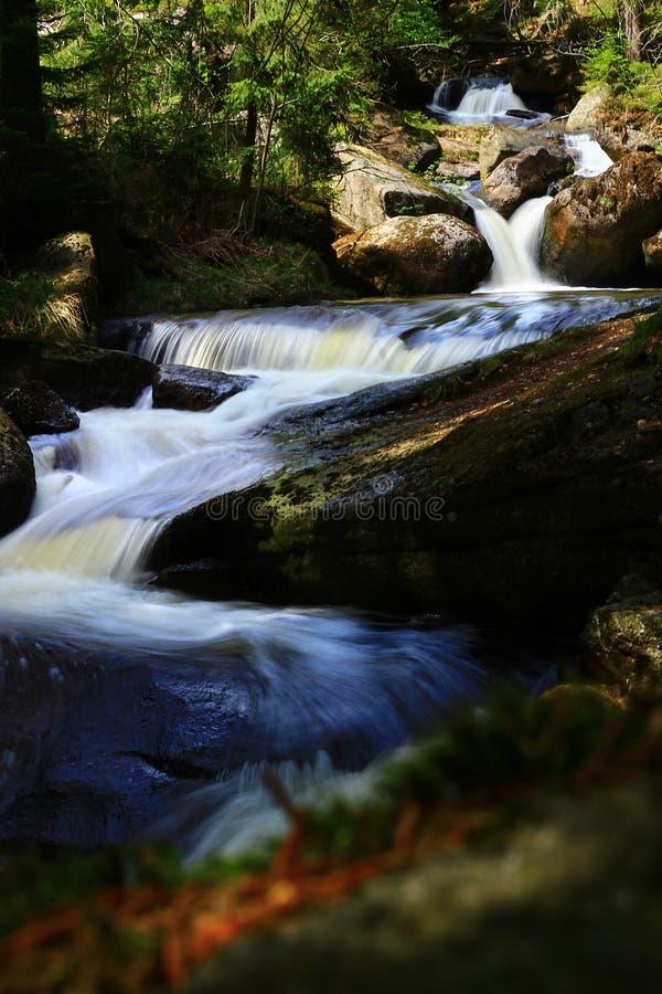 Cascades de cascade dans la forêt de montagne photographie stock