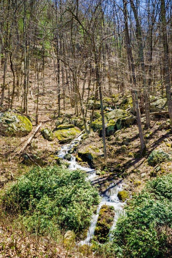 Cascades de cascade de montagne dans les bois photos libres de droits