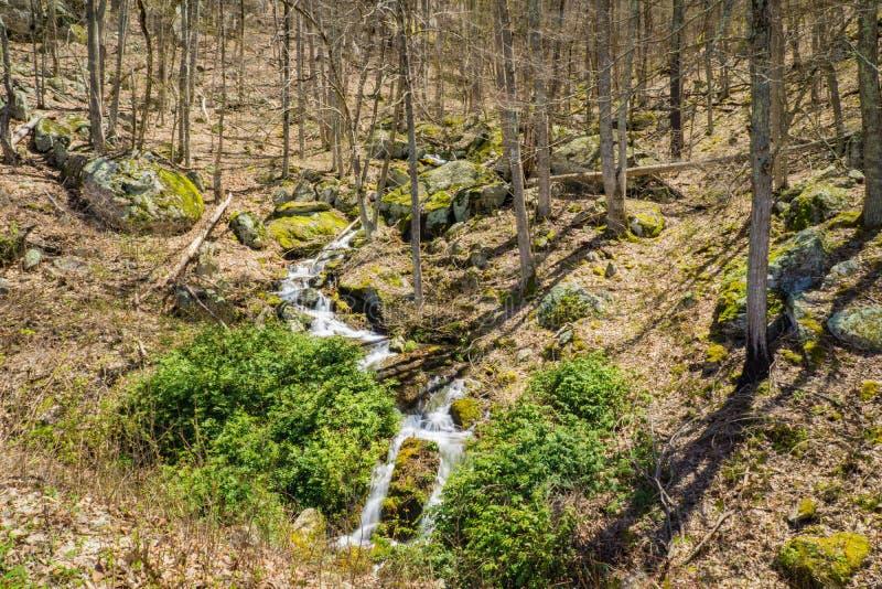 Cascades de cascade de montagne dans les bois - 2 photo libre de droits