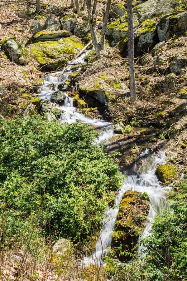 Cascades de cascade de montagne dans les bois - 3 photographie stock