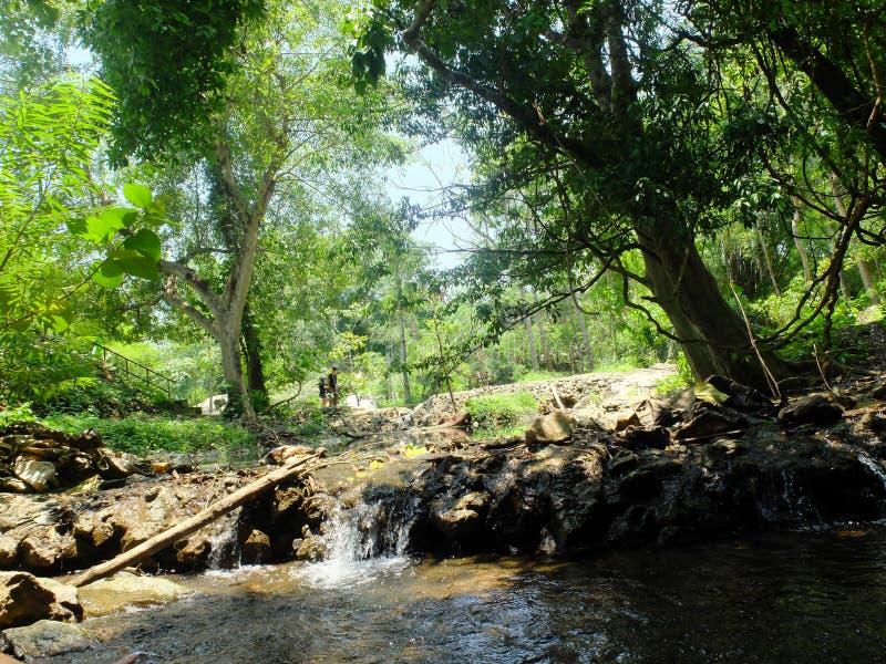 Cascades et petits bassins dans une forêt fraîche et verte, très naturelle en Thaïlande photographie stock libre de droits