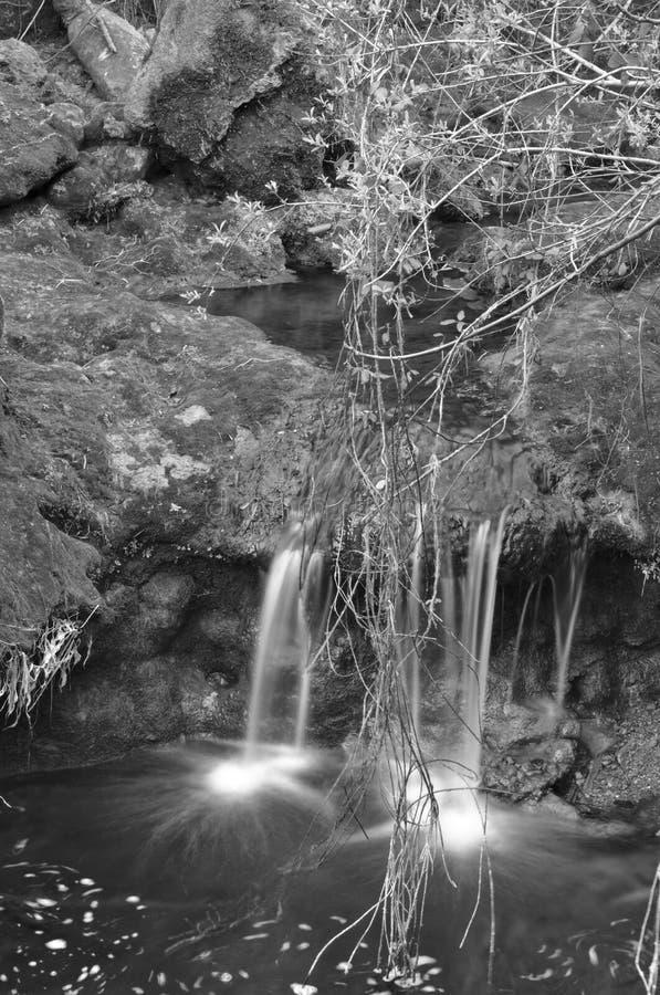 Cascades et végétation image libre de droits