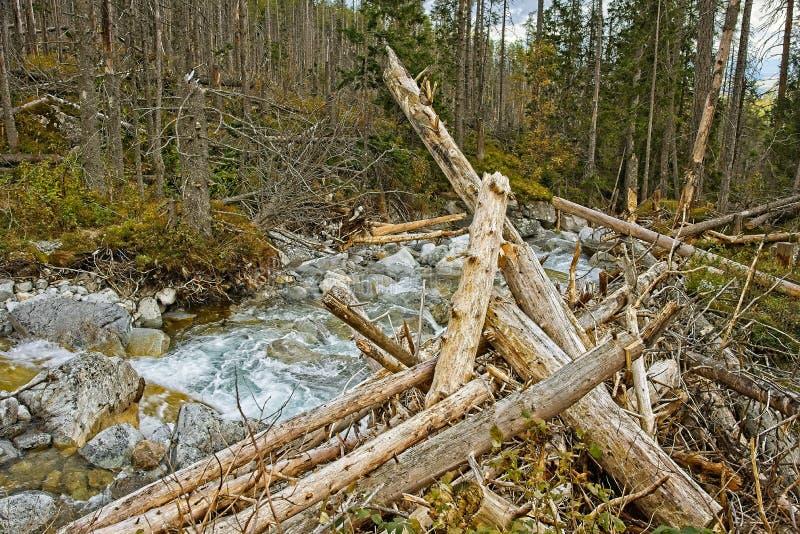 Cascades froides de grincement photographie stock
