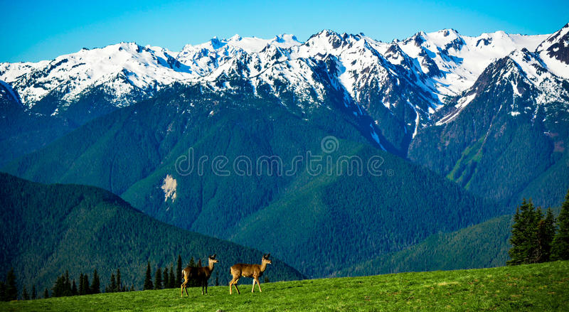 Cascades of Hurrican Ridge royalty free stock images