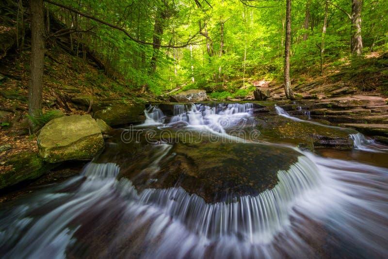 Cascades le long de Glen Leigh en Ricketts Glen State Park, Pennsylvanie photos libres de droits