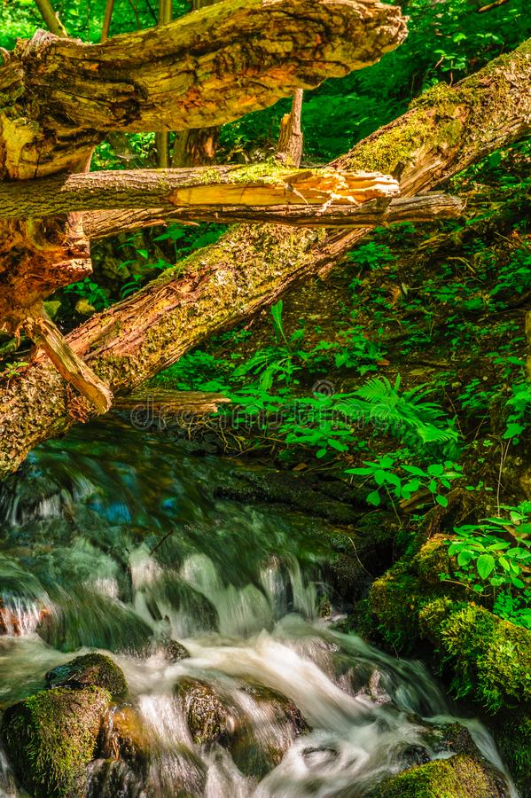 Cascades on the river under windfalls stock photo