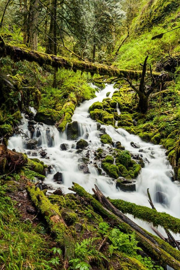 Cascadewatervallen in bos de stijgingssleep van Oregon stock afbeeldingen