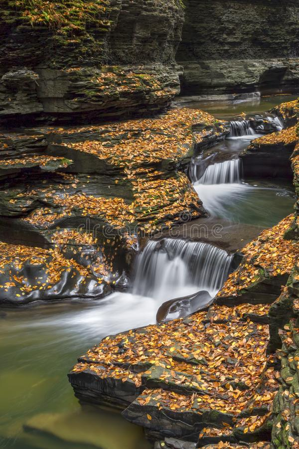 Cascading Through Autumn. Water splashes down a rocky chute surrounded by fallen autumn leaves at Watkins Glen State Park in New York`s Finger Lakes Region royalty free stock image