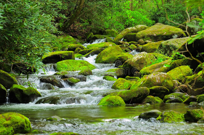 Cascading Mountain stream. White water mountain stream with rocks, moss, leaves, and trees royalty free stock photos