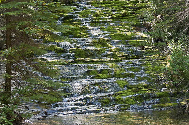 Download Cascading wilderness brook stock photo. Image of stream - 22120390