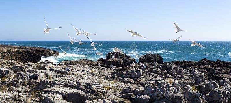 Cascais Seagulls i obraz stock