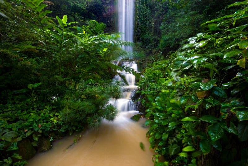 Download Cascata immagine stock. Immagine di acqua, stagno, pietre - 3880015